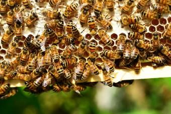 Inteligentne, podłączone do internetu ule mogą uratować pszczoły przed wyginięciem