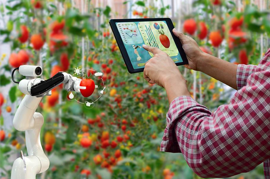 25 mln zł trafi na wsparcie innowacyjnych projektów w rolnictwie
