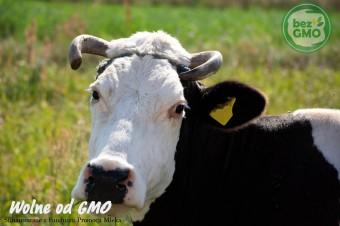 Bez GMO - warto sięgać po certyfikowane produkty