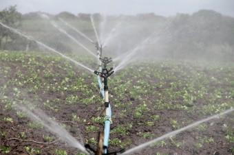 Przez zmiany klimatu uprawy rolnicze wymagają coraz większego nawadniania