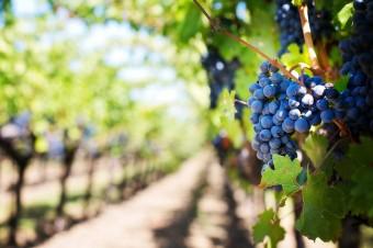Porady UOKiK - jak powinna wyglądać korzystna umowa na dostawy produktów rolnych