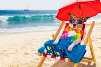Pupil na wakacjach