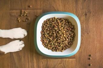Węgierska spółka Partner in Pet Food przejmie Mispol
