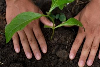 Nestlé przedstawia plany wsparcia regeneracyjnych systemów żywnościowych