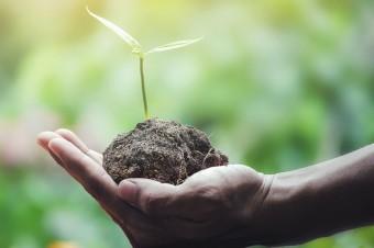 Od nowego roku wejdzie w życie nowa ustawa o rolnictwie ekologicznym