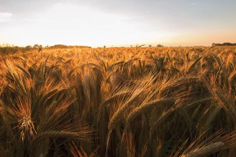 Brand of Polish agri-food products  – prospects for development on foreign markets