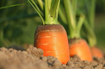 Agri-food export – the driving force of the Polish economy
